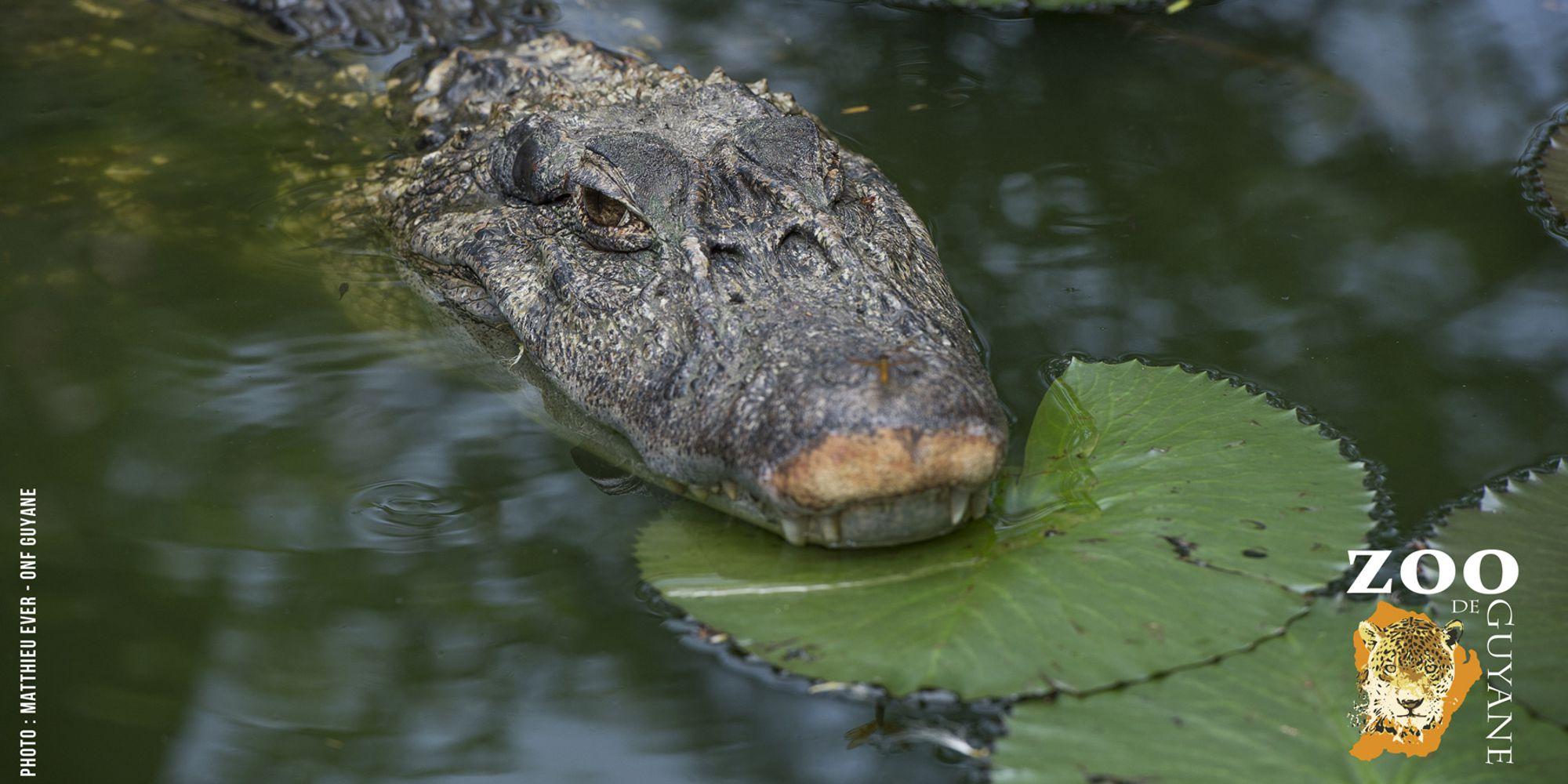 Cap sur le zoo de Guyane avec Guyane Evasion