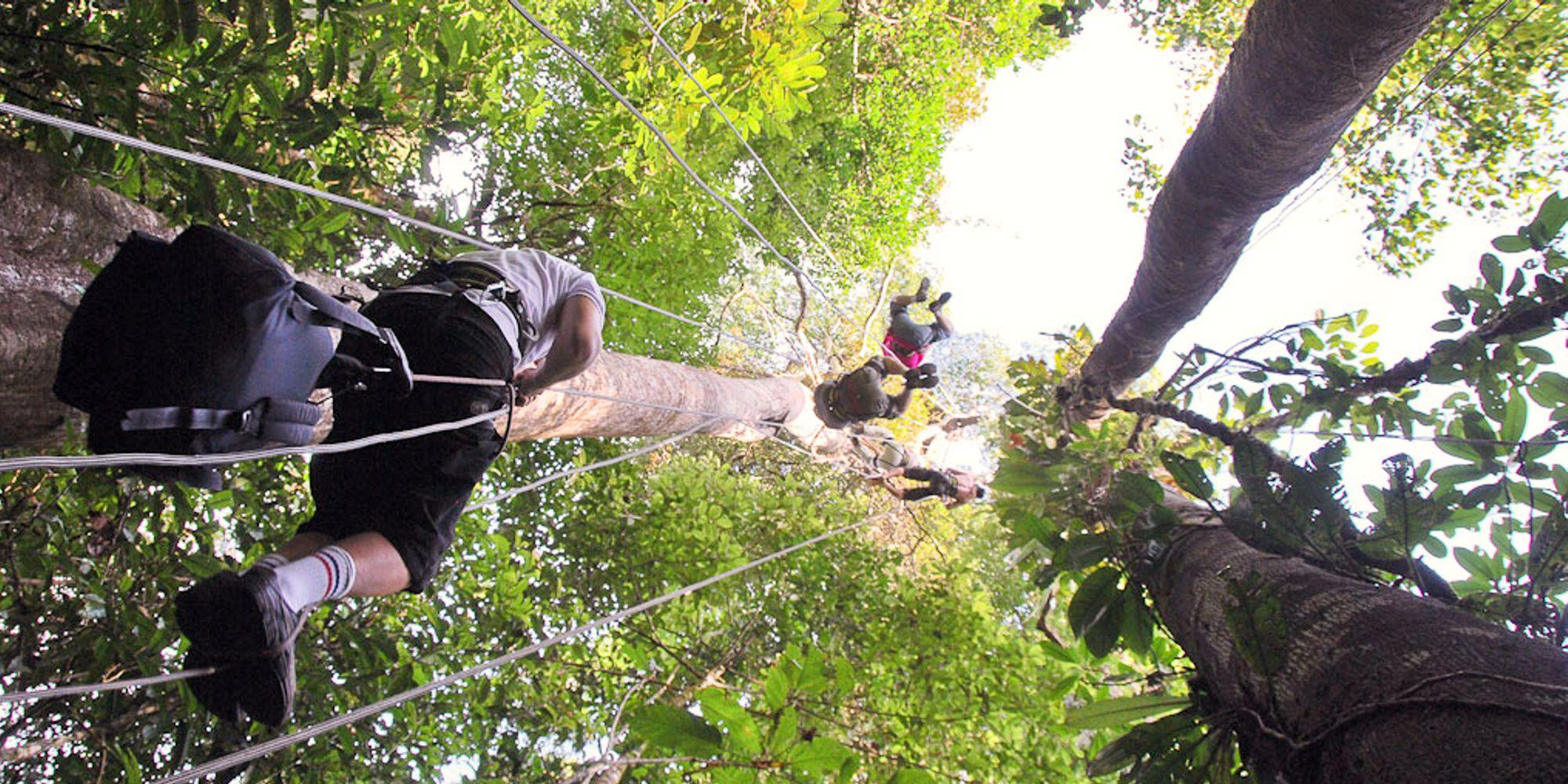 Cap sur le camp Canopée avec Guyane Evasion