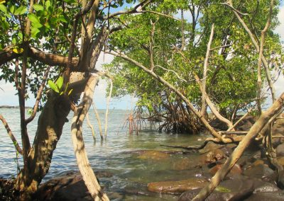 Cap sur l'Ilet Dupont en Kayak avec Guyane Evasion
