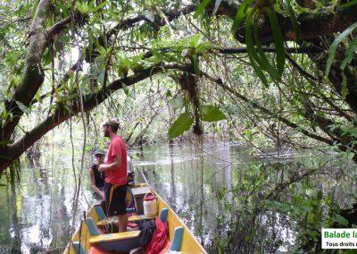 Cap sur la crique Gabriel et la cascade Fourgassié avec Guyane Evasion